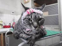 猫 美容 ココちゃん&ラム君
