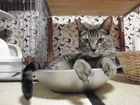 猫 ひんやり涼しいねこ鍋