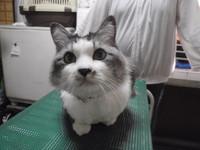 猫 ミニ美容 ミミちゃん