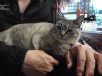 猫 カフェ 爪切り マミちゃん&ルミちゃん