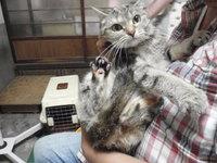 猫 爪切り 6匹家族