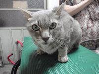 猫 美容 トシゾウ君