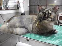 猫 美容 マーブルちゃん