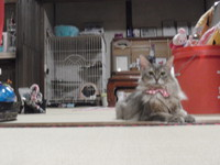 猫 アニマルコミュニケーション みーこイベント