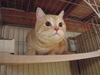 猫カフェ みーこ マロ君
