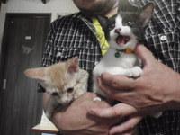 猫 みーこ リンゴちゃん&ライムちゃん
