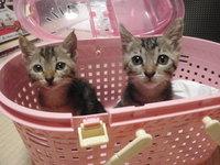 猫 里親募集(外) 3匹