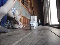 猫 ハリネズミ ふれあい