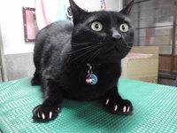 猫 ネイルキャップ 爪切り ラムちゃん家族