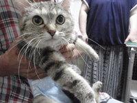 猫 爪切り たーちゃん家族