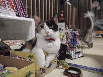 猫 みーこ 10周年記念イベント 10月