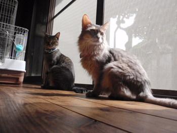 猫 みーこ 10周年記念イベント お知らせ
