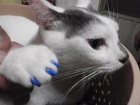 猫 ネイルキャップ グレちゃん