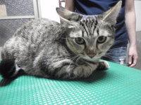 猫 爪切り ハナちゃん&クロちゃん
