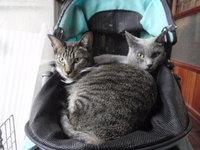 猫 みーこ 3連休 よろしくお願いします。