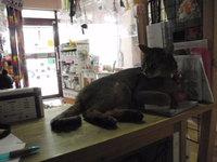 猫 みーこ 前店 懐かしいね