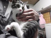 猫 ミニ美容 爪切り