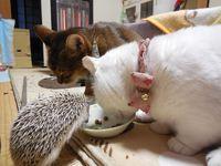 猫 みーこ 年末美容・ホテル 忘年会のお知らせ