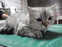 猫 ミニ美容 爪切りと アリスちゃん&ユキちゃん