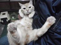 猫 爪切り 5匹猫家族