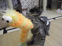 猫 里親募集 新作おもちゃ