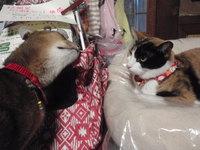 猫 みーこ 12月のお知らせ