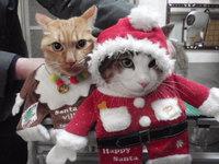 猫 美容 マロン君&ムギ君