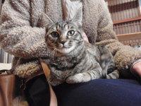 猫カフェ みーこ 幸ちゃん