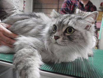 猫 ミニ美容 爪切りなど・・・