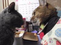 猫 みーこイベント アニマルコミュニケーション