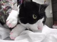 猫 ネイルキャップ ももちゃん