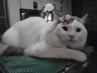 猫 美容 グレア君&ユディアちゃん
