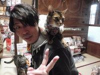 猫カフェ みーこ 肩乗り猫 小ちゃん アビシニアン
