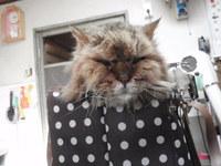 猫 美容 ケンシロウ君 22歳