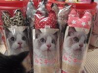 猫 人気NO.1 ねこキック!