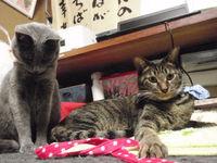 猫 アニマルコミュニケーション みーこイベント 猫の日