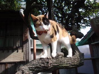 猫 夢空間 気ままなみーこ