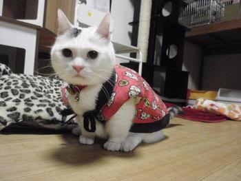 猫 ちこちゃんBD 5歳おめでとう