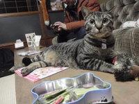 猫カフェ みーこ にぃちゃん 里帰り
