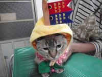 猫 うさぎ 美容 鯉のぼり