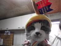 猫 鯉のぼり帽子 子供の日 みーこイベント