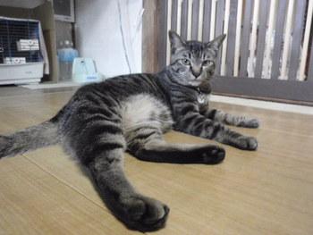 猫 ホテル サラちゃん&にぃちゃん