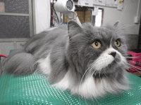 猫 美容 ロンちゃん家族 長毛猫