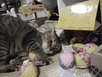 猫 夢空間 気ままなみーこ サラちゃん&にぃちゃん