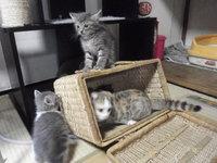 猫カフェみーこ 本日5時30分 閉店
