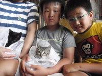 猫 里親体験 黒猫&キジトラ兄弟