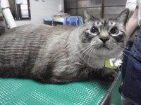 猫ミニ美容 きのちゃん