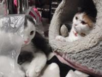 猫夢空間気ままなみーこ