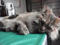 猫 ミニ美容 うるちゃん