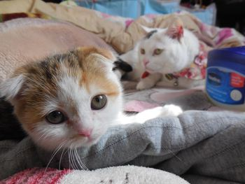 猫カフェ みーこ 新猫 みんちゃん